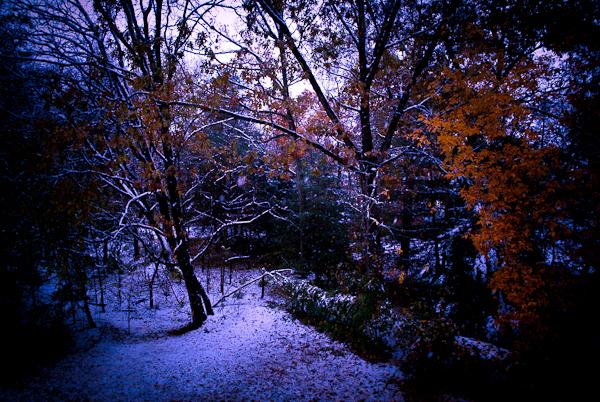 Night Path, Hunter Hill, October 2011