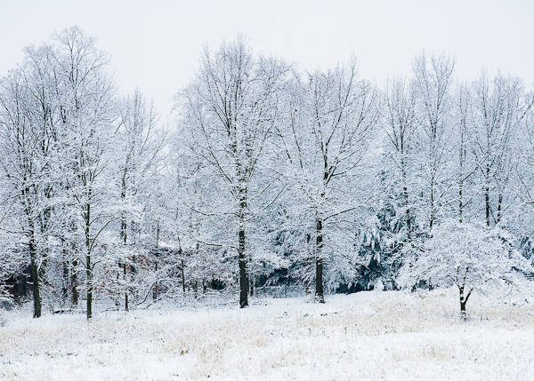 Winter Treeline, 2008