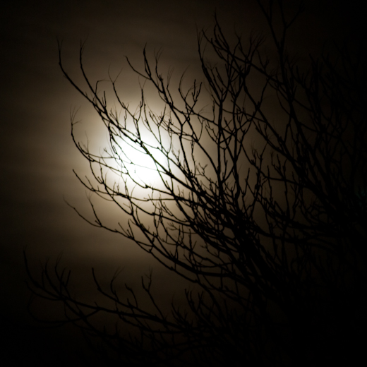 Gold, Moonlight and Branches, Hunter Hill, Winter 2008