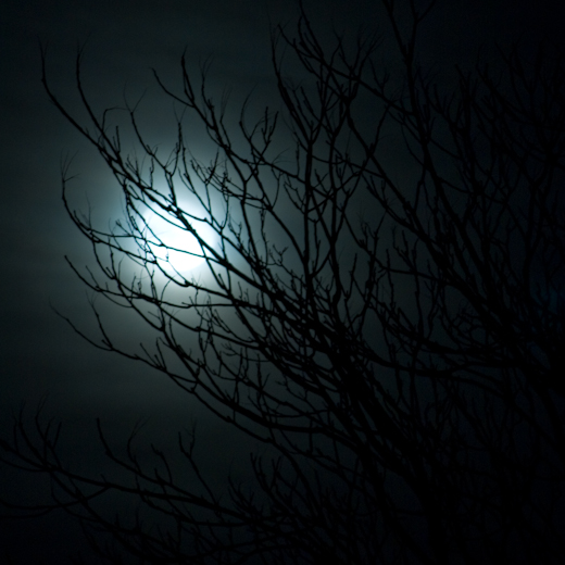 Blue, Moonlight and Branches, Hunter Hill, Winter 2008