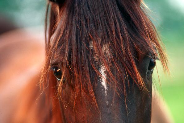 Equine Eyes, Snapshot, n.d.