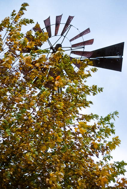 Goes With The Wind, Bascule Farm, Poolesville, Maryland, Autumn,
