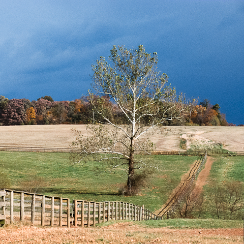 Sycamore, Bascule Farm, Poolesville, Maryland, Autumn, 2001