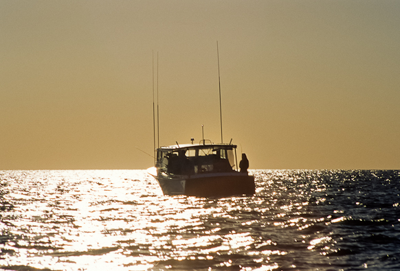 Backlighted, Later Afternoon, Chesapeake Bay, Maryland, May 26,
