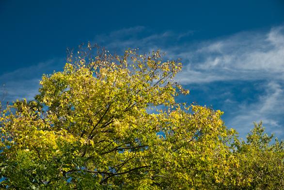 Treetop, Pangborn Park, Hagerstown, Maryland, September 8, 2013