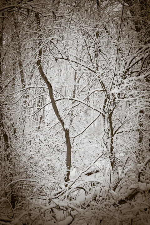 Inverse, Snow Day, Hunter Hill, Hagerstown, Maryland, December 1