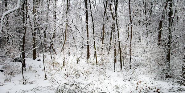 Walk In the Woods, Snow Day, Hunter Hill, Hagerstown, Maryland,
