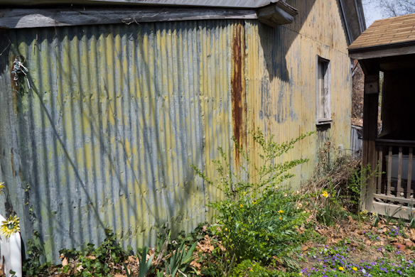 Corrugated, Shed, Private Garden, Cambridge, Maryland, April 13,