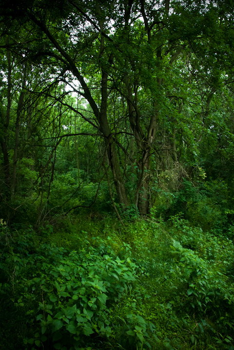 Woods, Hunter Hill, Hagerstown, Maryland, June 4, 2015